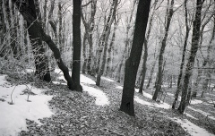 Roman Korec - At The Edge of Eden koniec sveta _ 027
