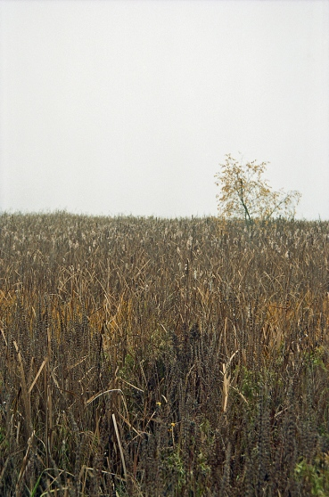 Roman-Korec-photography-Lost-in-VanRELand-the-Impressionist-Years-018